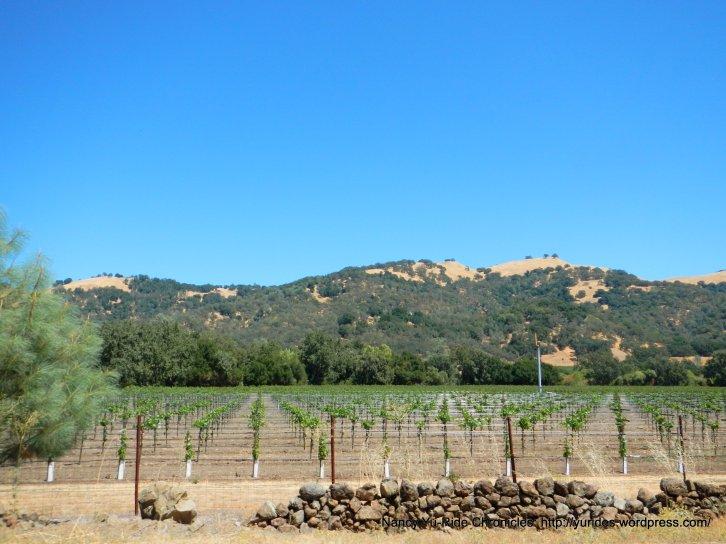 chiles valley vineyard