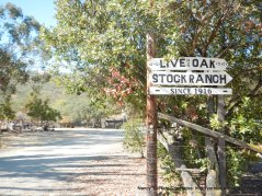live oak stock ranch