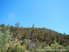 mines rd landscape