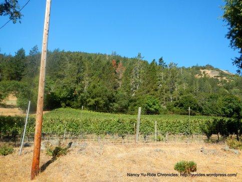 jericho canyon vineyard