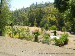 residential garden