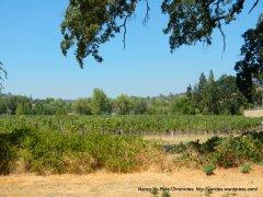 high valley vineyard