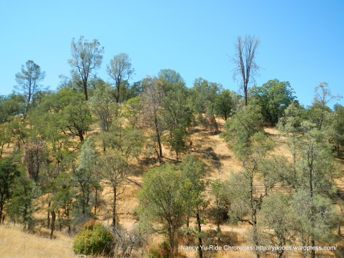 coyote valley landscape