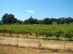 coyote valley vineyard