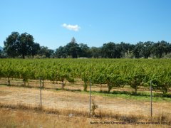coyote valley vineyard
