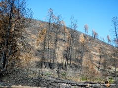 butts canyon burn zone