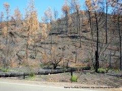 butts canyon burn zone