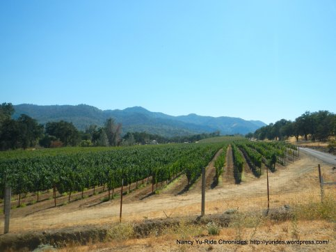 pope valley vineyards