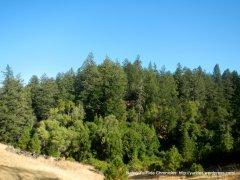 ink grade forest