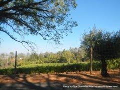 ink grade rd vineyard