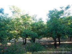 ink grade orchard