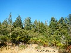 ink grade rd woods