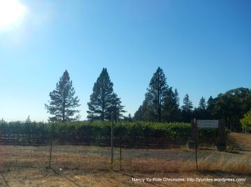 angwin vineyard
