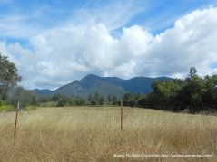 open meadows-view of Mt St helena