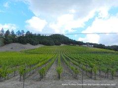 chalk mountain vineyard
