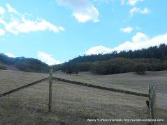open meadow