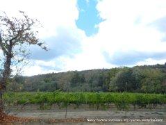 st helena rd vineyard