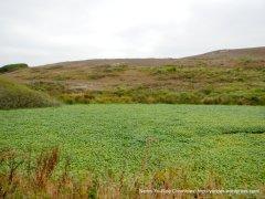 pierce point wetland