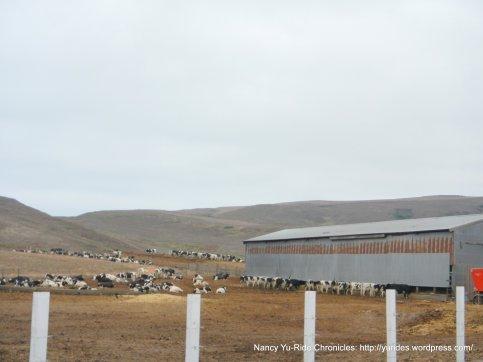 historic J ranch