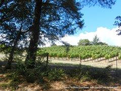 schweiger vineyards