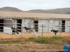 j ranch