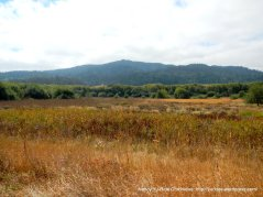 olema marshes