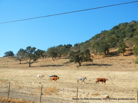yount mill longhorns