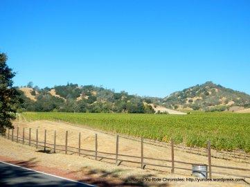 hilltop vineyard