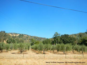 valley olive grove