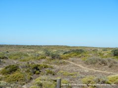 coastland meadows