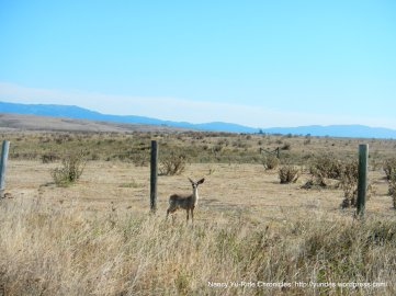 coastal landscape-deer