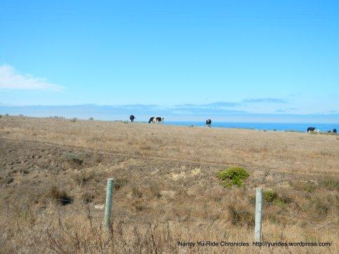 coastal grazing