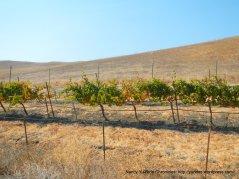 front yard vines