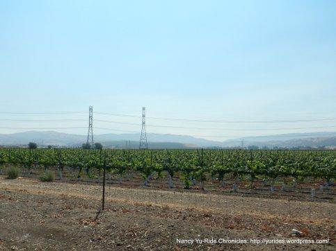 livermore valley vineyards
