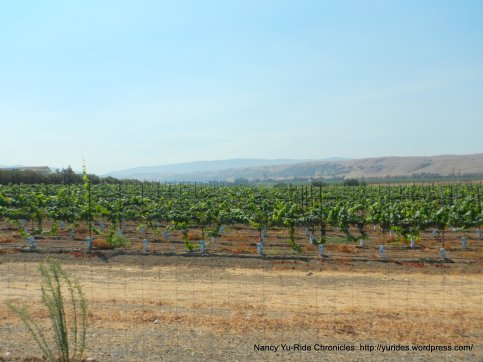 livermore valley vineyards