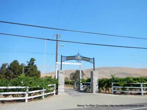 bodegas aguirre vineyard