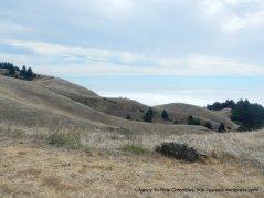 golden grassy hillsides