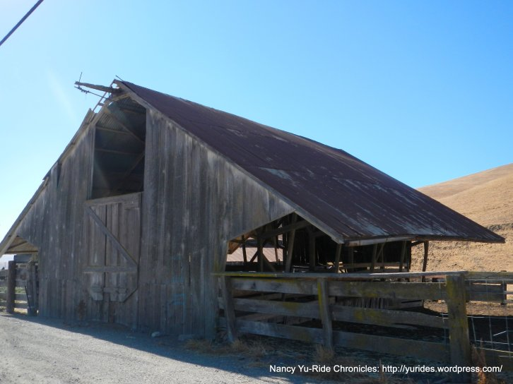 manning rd-open cattle barn
