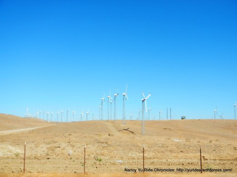 altamont pass windfarm