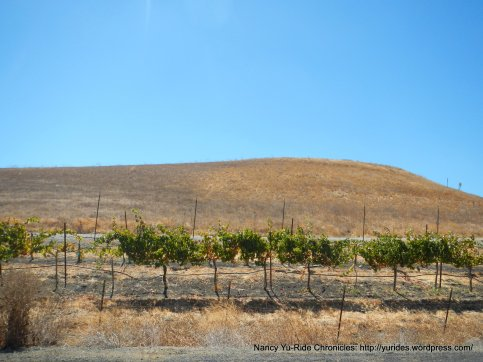 collier canyon vines