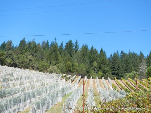 porter-bass vineyards