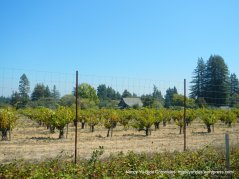 harrison grade rd orchards