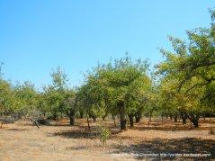Facedini Ln orchards