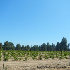 occidental rd vineyard