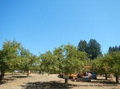 jovine rd orchards