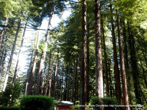jovine rd redwoods
