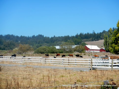 cattle ranch-freestone