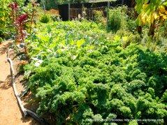 wild flour bread garden