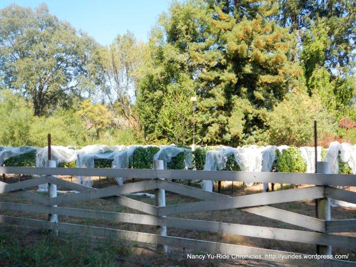 freestone vineyard