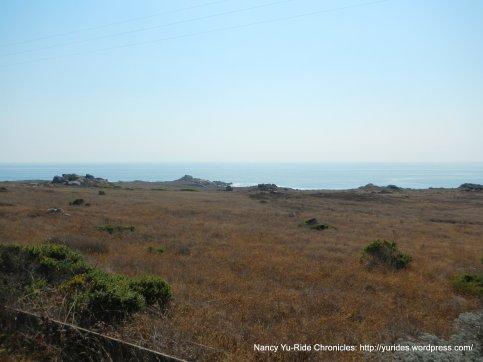 coastal meadow